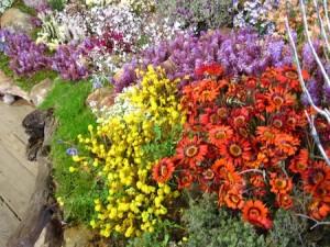 Clanwilliam Flower Show